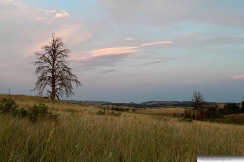 Black Hills Prairie